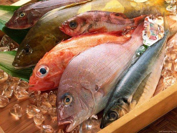 cá chứa hàm lượng Protein và khoáng chất lớn